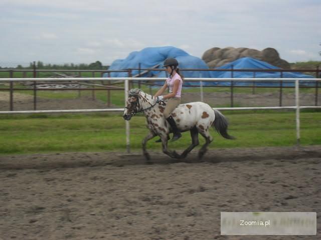 JAZDA KONNA, PENSJONAT dla koni, woj lubelskie