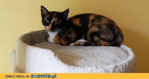 3 miesięczne kociaki szukają kochających domków na zawsze,  Koty pospolite cała Polska