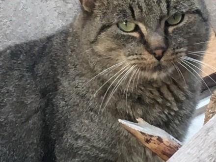 Franio, łagodny kociak szuka domu!