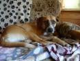 Bela, wesoła, pełna energii, bardzo łagodna sunia do adopcji!