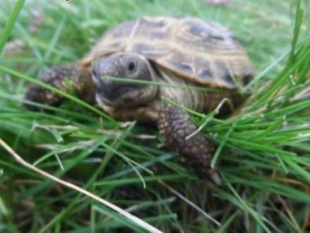 Sprzedam żółwie stepowe+terrarium z wyposażeniem   łódzkie Łódź