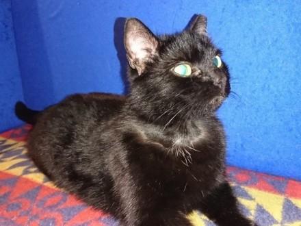Roczna kotka Balbina szuka domu