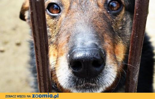 Aslan - pies, który uwielbia ludzi,  małopolskie Kraków