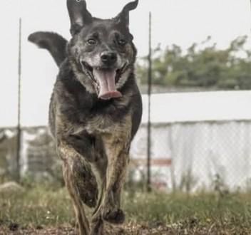 TEODOR - kochany  wrażliwy psiak szuka domu!   małopolskie Kraków