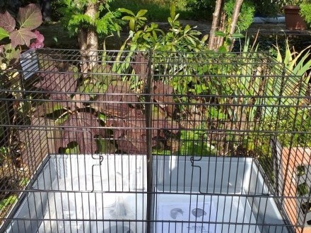 Ptakiklatka dla parków