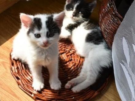 Celinka i Malinka szukają wspólnego domu wychodzacego,  śląskie Gliwice