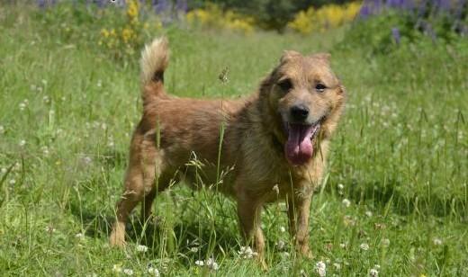 Astor - pies  który nigdy nie był kochany  szuka domu   pomorskie Wejherowo