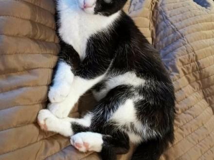 Spokojna i cicha kotka szuka domu  który zapewni jej opiekę i miłość