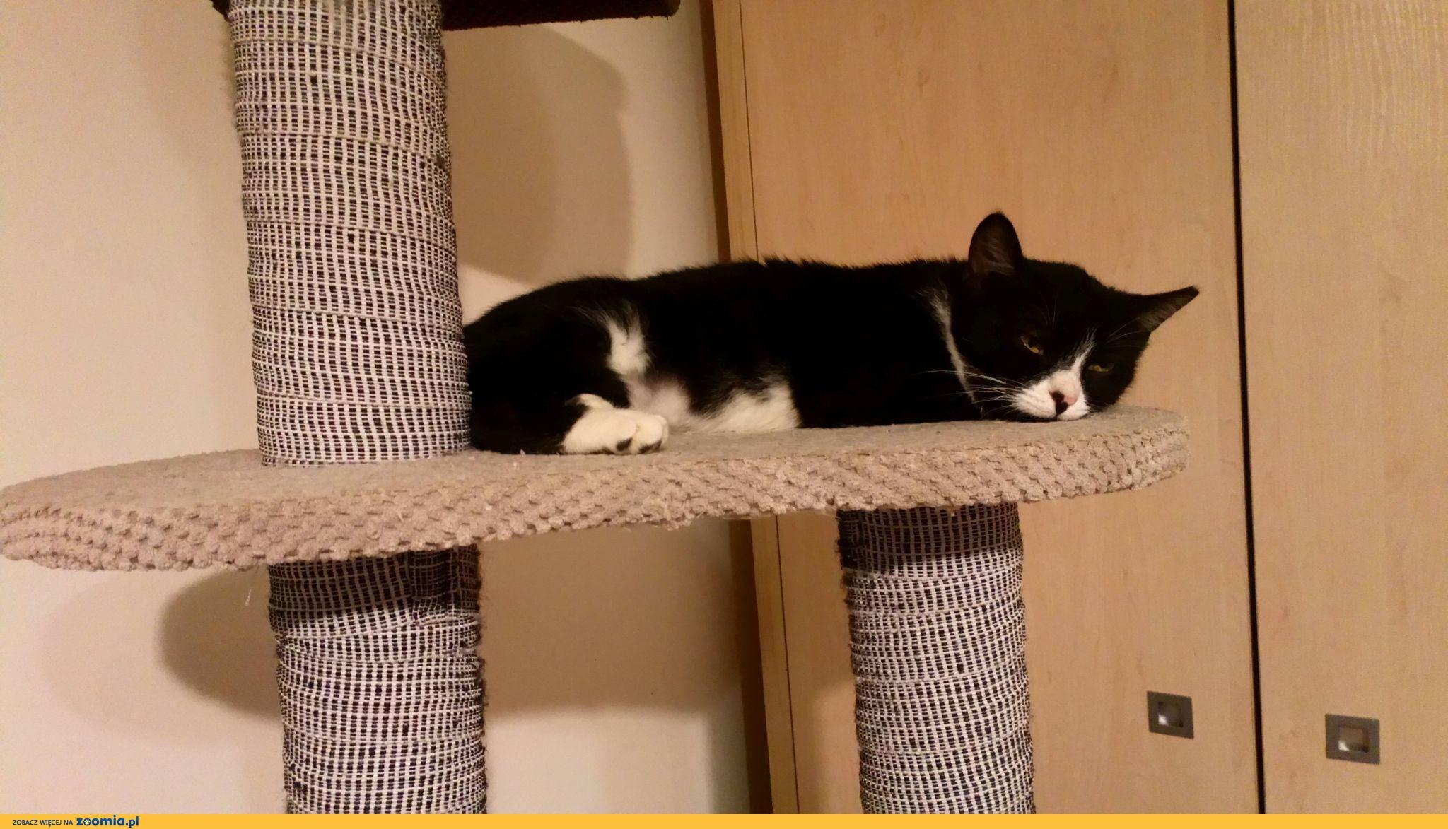 Koteczka Noris szuka domu