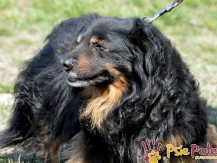 SERDUŃCIO-super miły  kochany  wspaniały psiak o jedwabistym włosie-adopcja