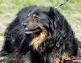 SERDUŃCIO-super miły, kochany, wspaniały psiak o jedwabistym włosie-adopcja