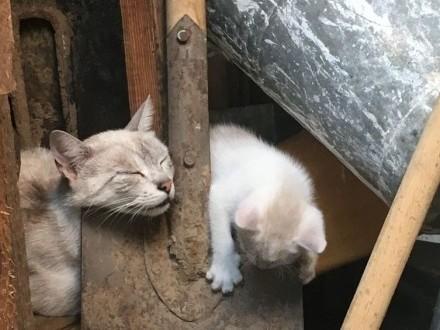 Kocie dzieci do oddania