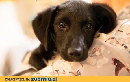 4-miesięczny słodki szczeniak szuka domu,  wielkopolskie Poznań