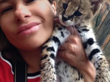 kitten savannah f1 dostępny rodowodem WCF