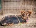'OTOZ Animals - Arczi - kochany, rozbrykany szczeniak szuka super domku