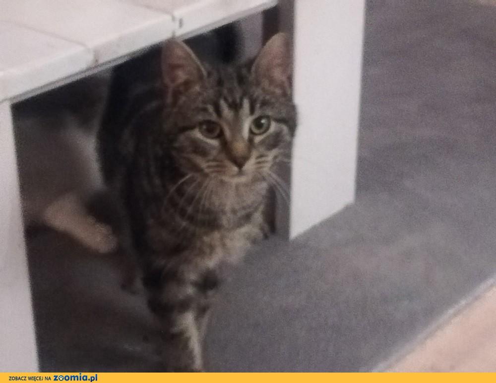 Koteczka Mysza szuka domu