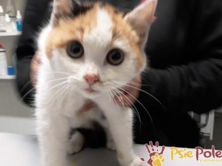 AFERKA-śliczniutka kotka  która potrzebuje cierpliwego opiekuna  adopcja