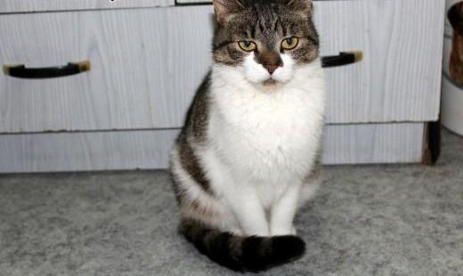 Dorosła kotka Merida szuka domu!   dolnośląskie Wrocław