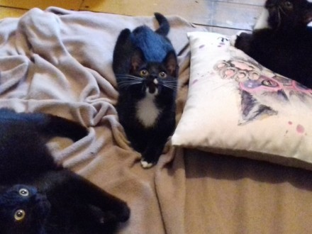 KOT: Niesamowite siostry  Melisa  Szałwia i Mięta z Fundacji Miasto Kotów  szukają domu