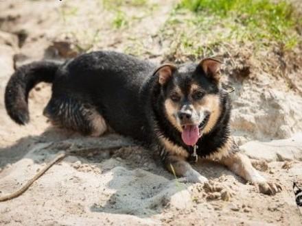 BERCIK - psi psycholog i terapeuta - adoptuj!   śląskie Gliwice