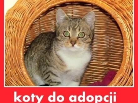 Z domu tymczasowego kociczka kocurkiADOPCJA   śląskie Katowice