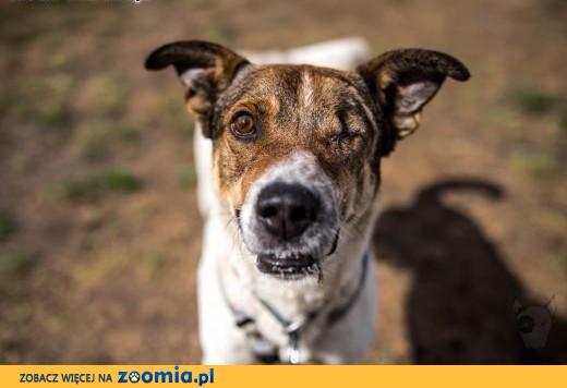KUMPEL - kawał psa co charakter ma,  małopolskie Kraków