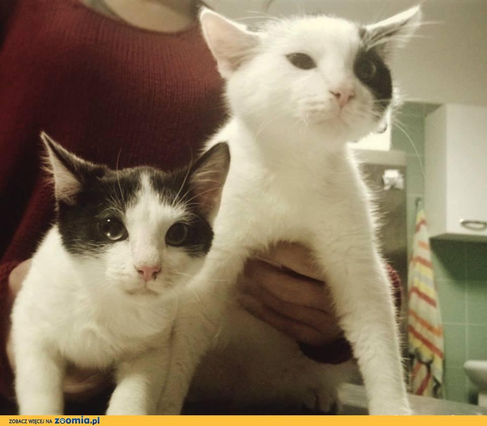 Urocze kociaki szukają domu