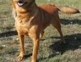 ROLO - przesympatyczny psiak z rozmerdanym ogonem szuka domu,  łódzkie Łódź