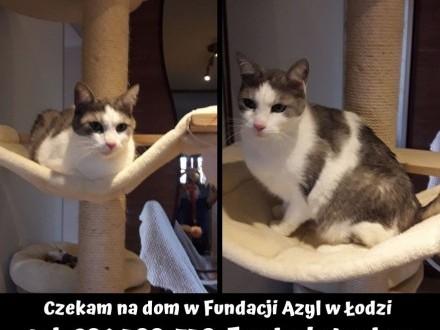 Kotek po śmierci właściciela potrzebuje nowego domu!