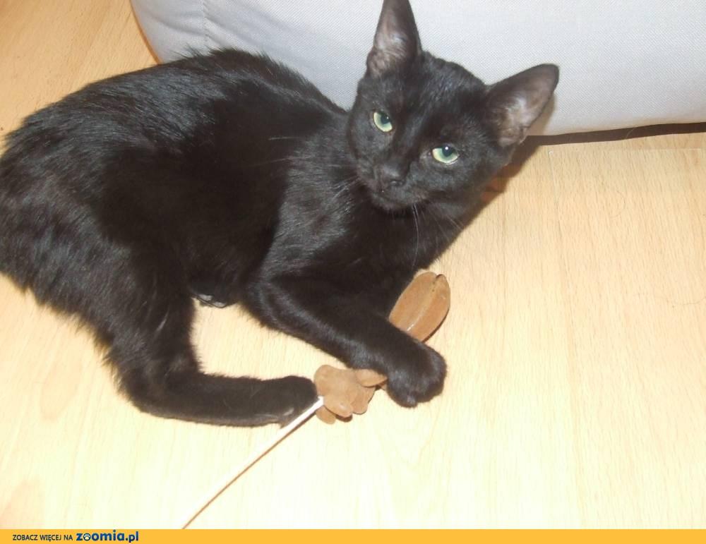 Koteczka Laki szuka domu