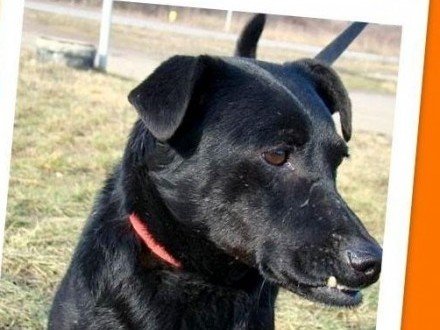 pniczer wader cudownie przytula ny sympatyczny redni pies adopcja mieszaniec oddam psa. Black Bedroom Furniture Sets. Home Design Ideas