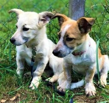7 miesięczne  małe  urocze szczeniaki wyrzucone na śmietnik do adopcji   wielkopolskie Poznań