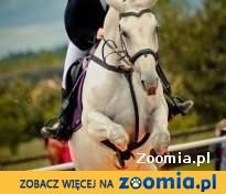 Koń do sportu !