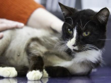 Isia - spokojna koteczka szuka domu