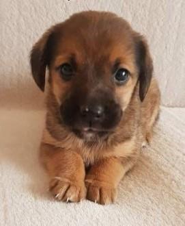 SISI - niewielka  urocza szczeniaczka szuka domu!   mazowieckie Warszawa