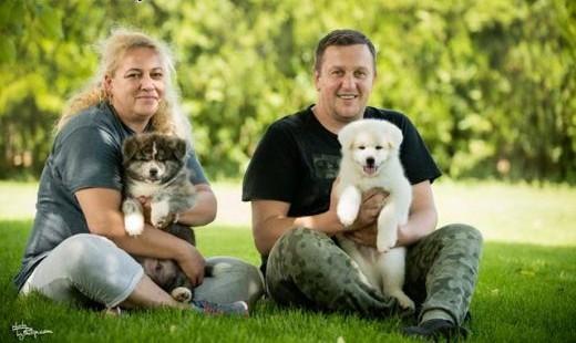 Akita inu  dwa najlepsze szczenięta płci męskiej   Pozostałe rasy cała Polska