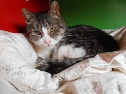 Kot marzyciel - dla kochających spokój   warmińsko-mazurskie Olsztyn
