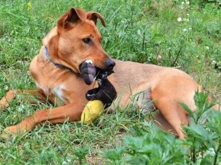 Młodziutki  przepiękny pies - Rudi :)