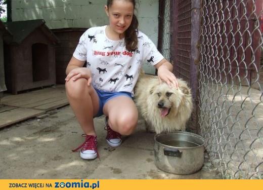 Uratuj psa z Azorka, adoptuj Skrzata,  mazowieckie Warszawa