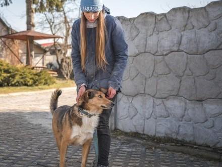 Helios-młody  idealny psi towarzysz!   śląskie Częstochowa