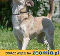 Nieduża Sonia zwana Myszką czeka na odpowiedzialnych opiekunów !,  mazowieckie Warszawa