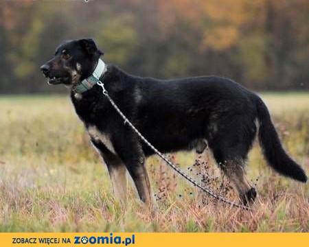 NERO - duży, kochany psiak, którego nikt nie chce... Błaga o dom!,  mazowieckie Warszawa
