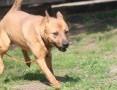 KUK - charakterny, wesoły, aktywny pies szuka domu!,  mazowieckie Warszawa