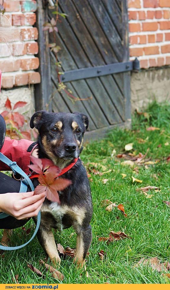 Nieduży Pimpuś, wesoły i przyjazny psiaczek szuka domu!