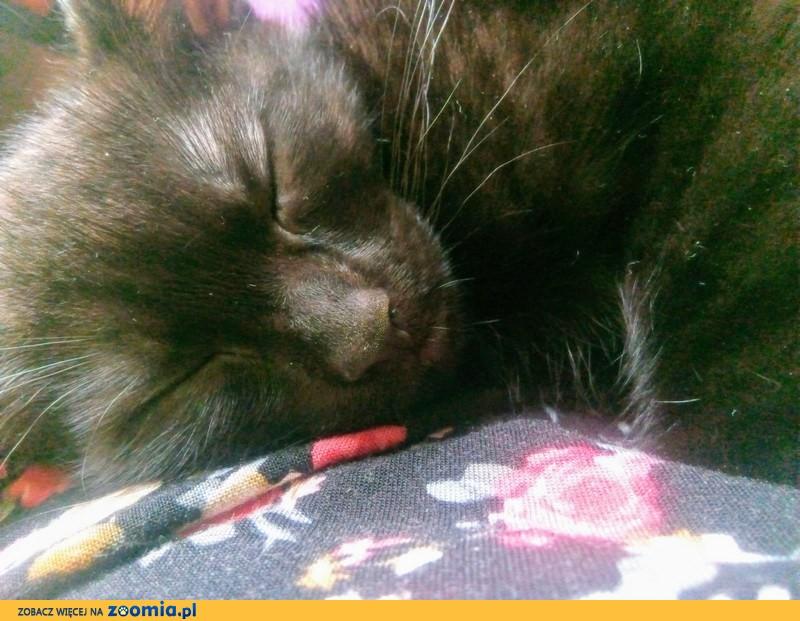 Koteczka Krysia szuka domu