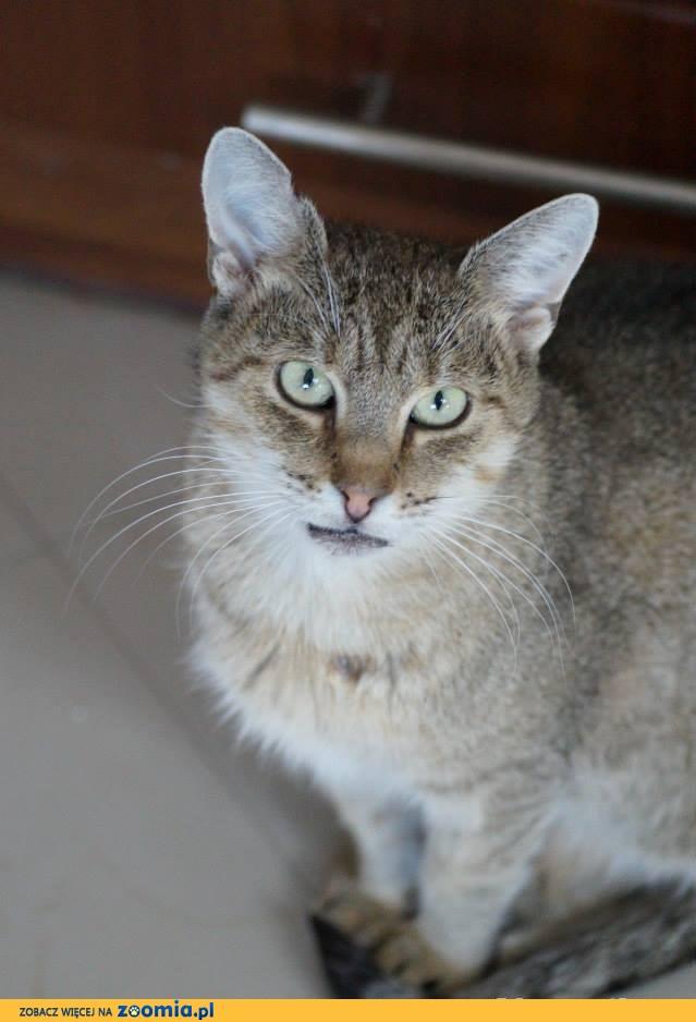 Elektra- spokojna i ułożona kotka szuka swojego miejsca.