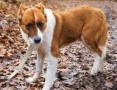 RUBIN młody delikatny wrażliwy psiak marzy o domku gdzie zazna szczęścia i miłości ,  Kundelki cała Polska