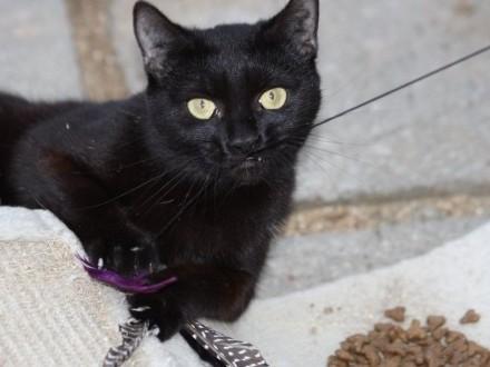Około roczne kocie siostry szukają domów