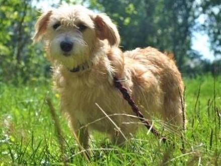 BIANKA - mała  kochana sunia w typie terriera szuka domu   mazowieckie Warszawa