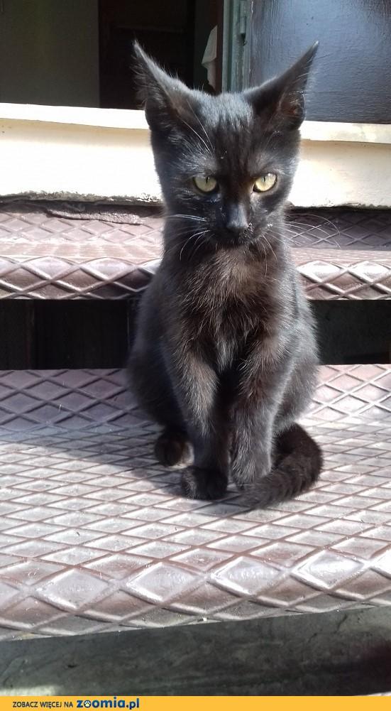 Czarny, śliczny kociak